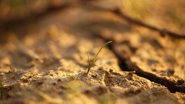 Can Regenerative Agriculture Reverse Climate Change?
